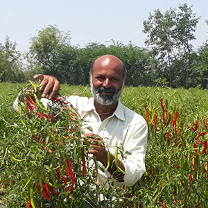 Cashing in on Organic Cultivation